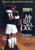Mitt liv som hund – Mein Leben als Hund | Lasse Hallström | Kritik