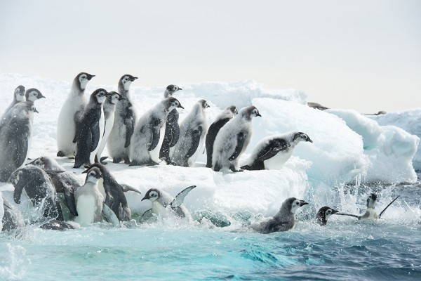 Reise_der_Pinguine_II_Filmstill_09
