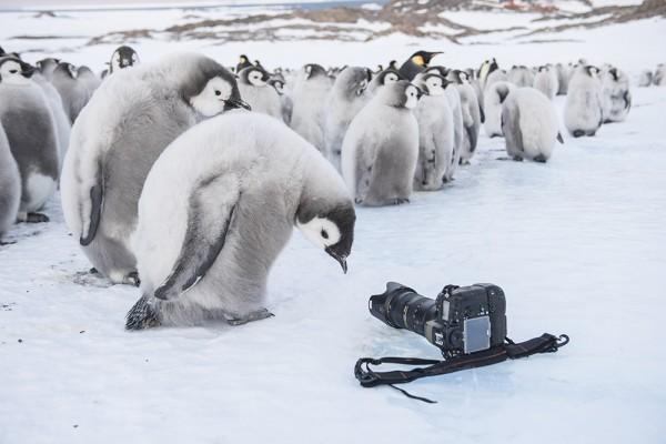 Reise_der_Pinguine_II_Filmstill_10