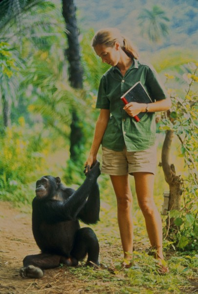 "Gombe, Tanzania - Jane formed a close bond with young Fifi. As the film ""Jane"" depicts, Jane and the other Gombe researchers later discontinued feeding and touching the wild chimps. The feature documentary JANE will be released in select theaters October 2017. (National Geographic Creative/ Hugo van Lawick)"