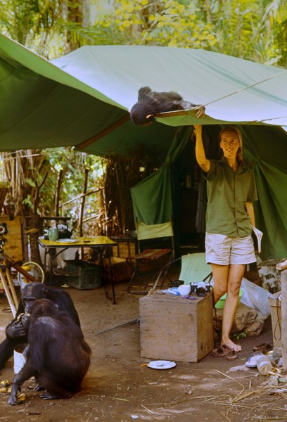 "Gombe, Tanzania - ""Flint"" peeks into a tent at Jane Goodall. The feature documentary JANE will be released in select theaters October 2017. (National Geographic Creative / Hugo van Lawick)"